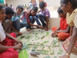 Children's excersize in plant diversity.